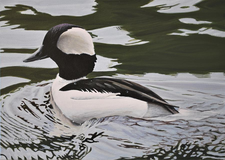Bufflehead by Peter Mathios