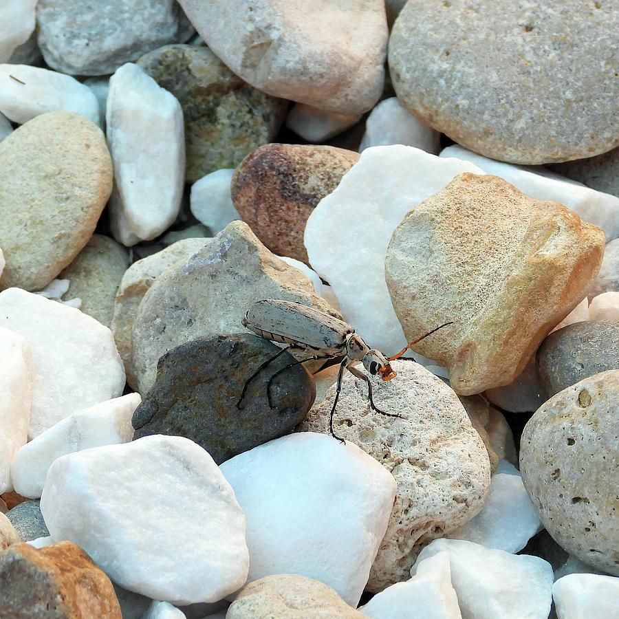 Bug On The Rocks Photograph
