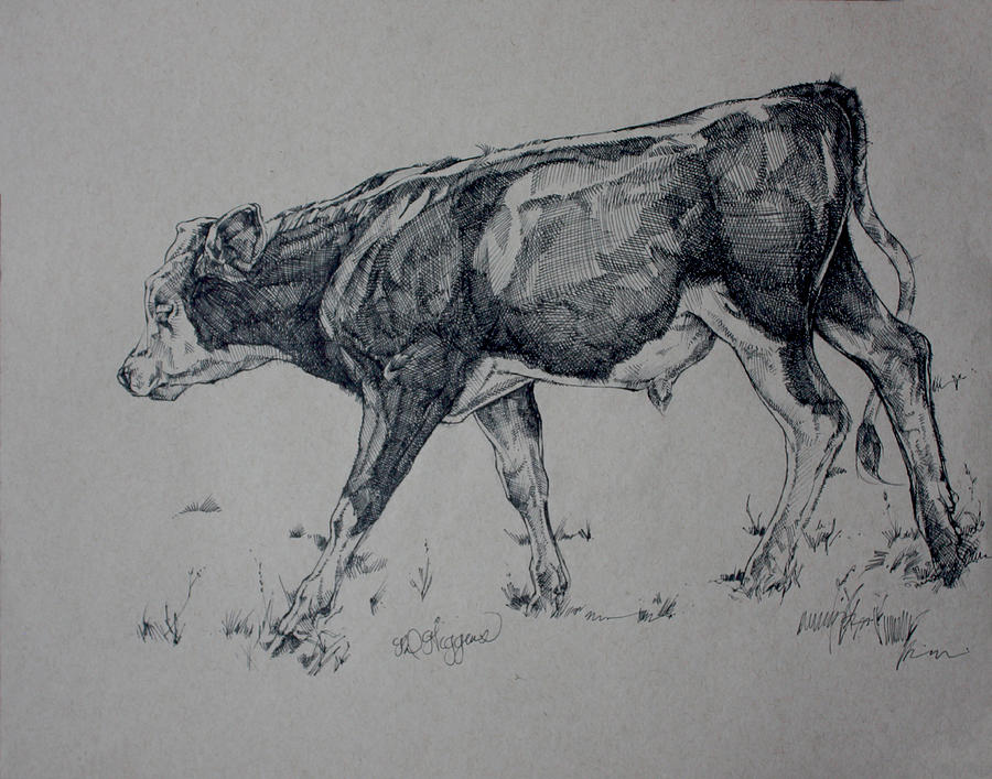Bull Calf Sketch by Derrick Higgins