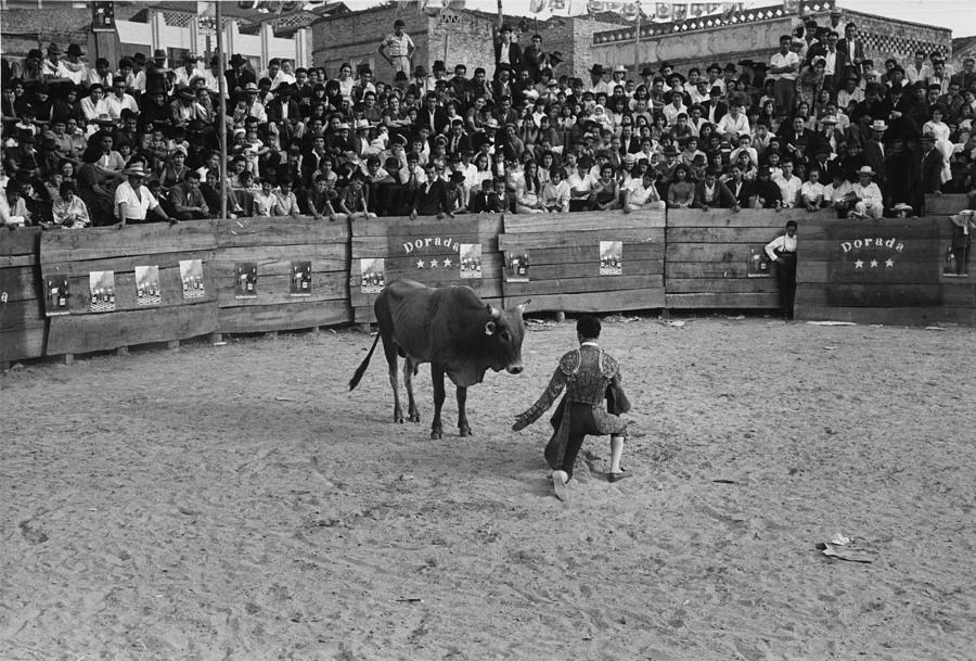 Bull Fight Photograph by Three Lions