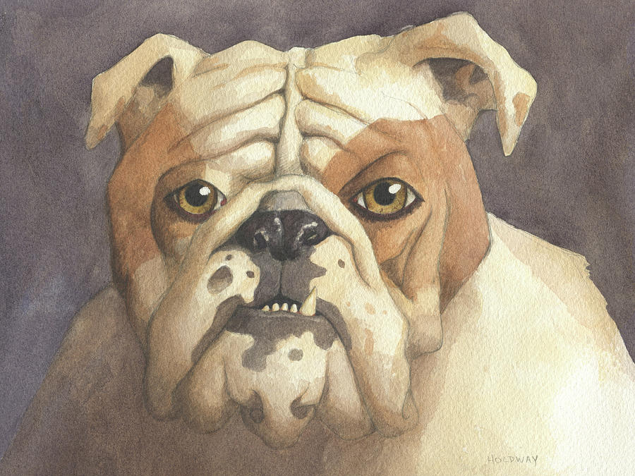 Bulldog by John Holdway