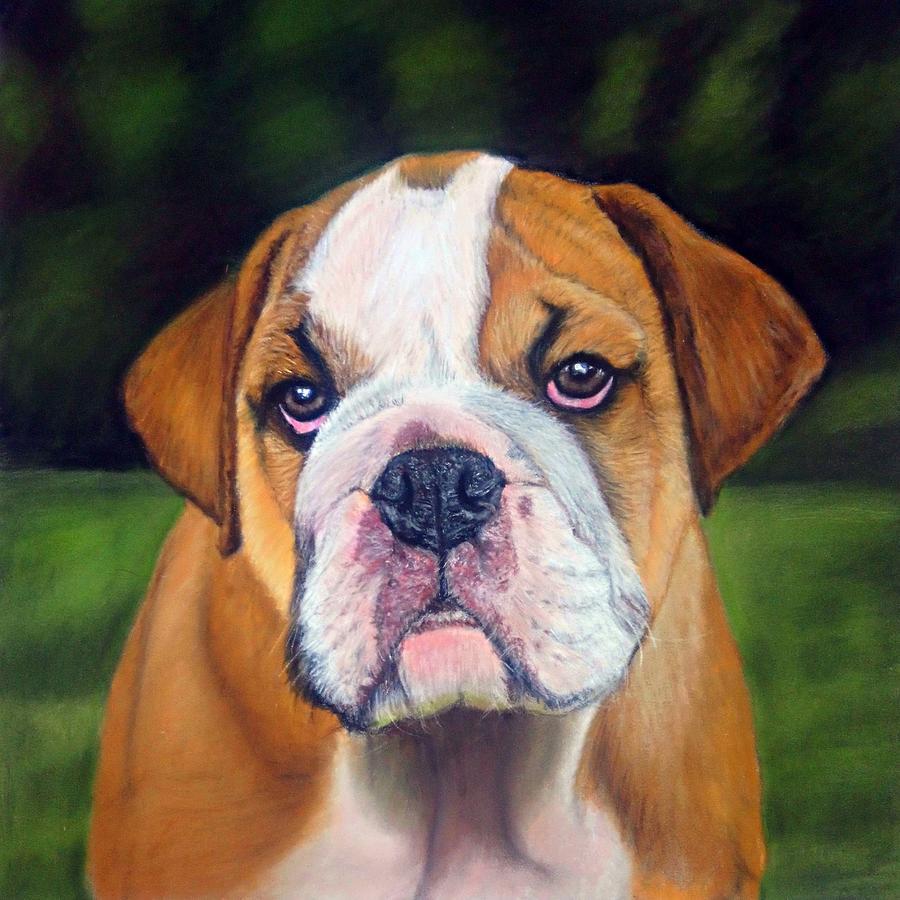 Bulldog Puppy Pastel Drawing by Rachel Maytum Designs