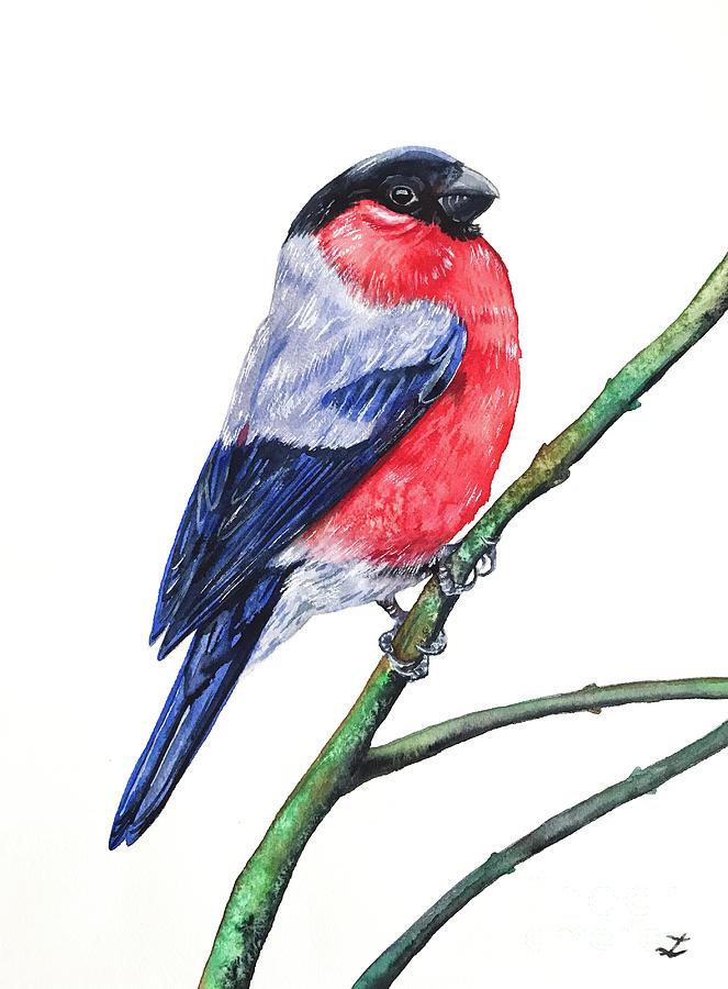 Bullfinch Painting