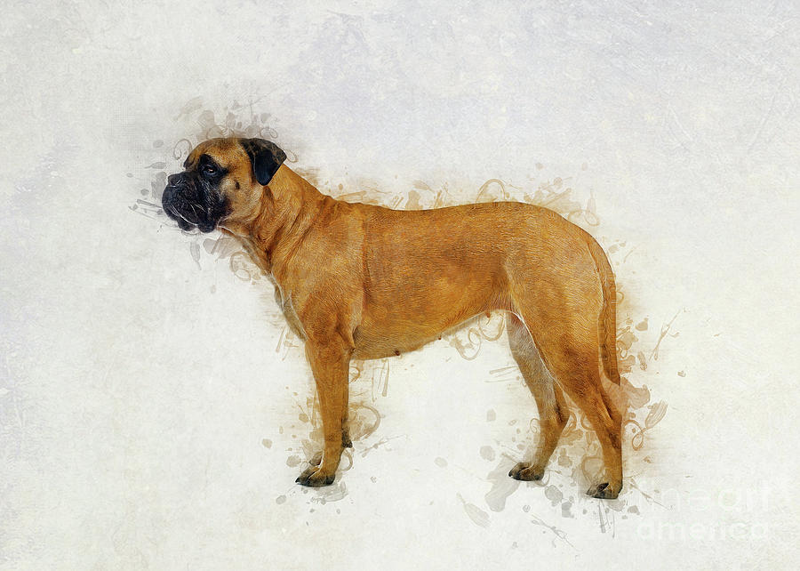 Bullmastiff by Ian Mitchell