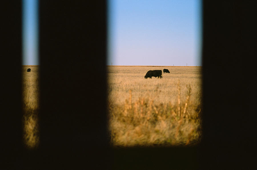 Bullwatching by Carl Young