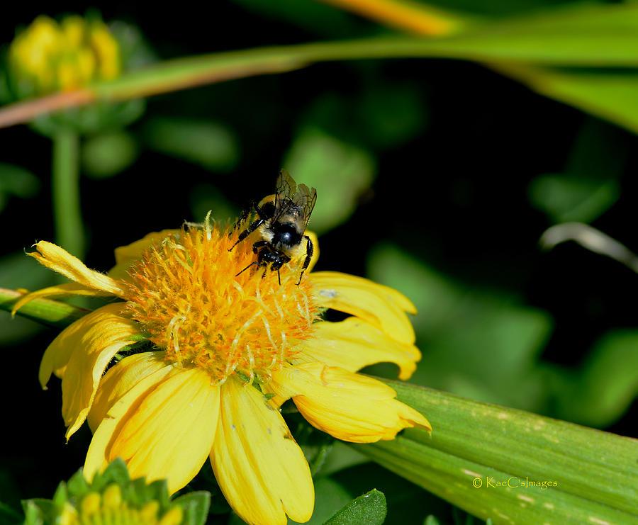 Bumblebee at Work by Kae Cheatham