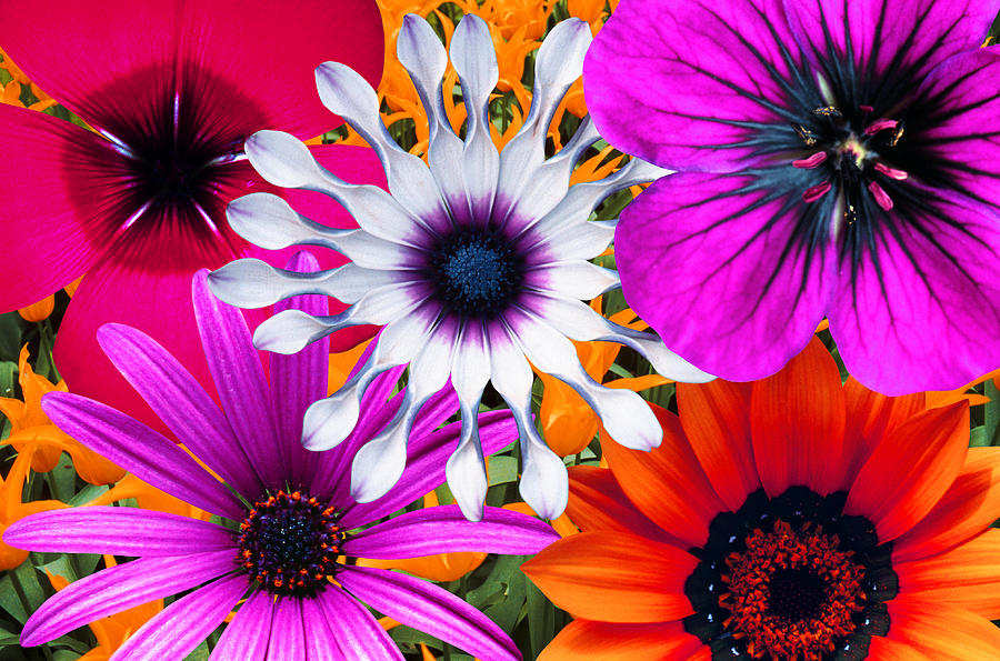 Bunch Of Multi Colored Flowers, Full Photograph by John Foxx