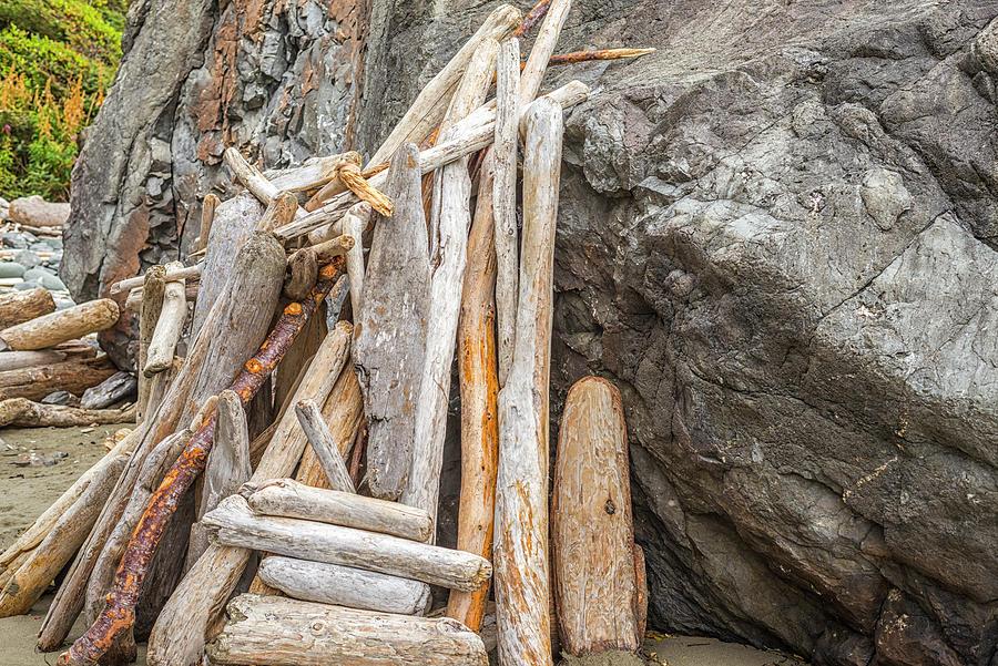 Driftwood Photograph - Bundle Of Driftwood Beauty by Joseph S Giacalone