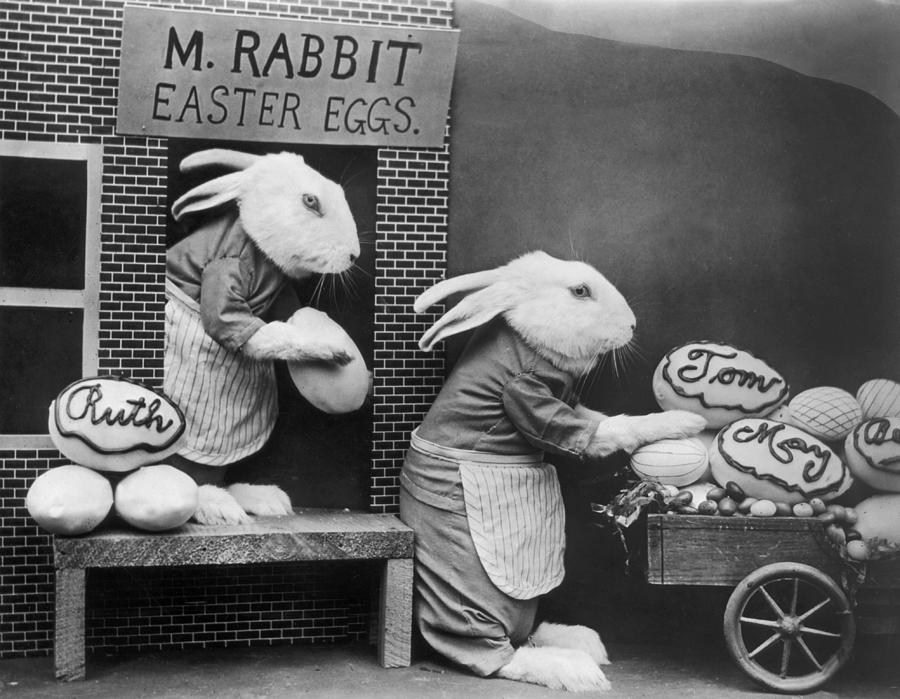Bunny Business Photograph by Frees