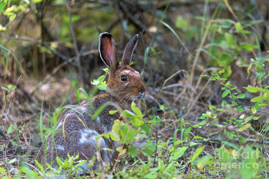 Bunny in the Wild by Matthew Nelson