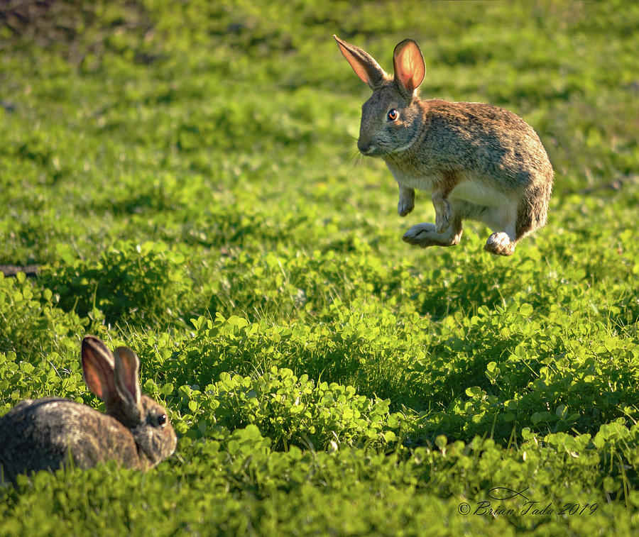 Airborne Bunny by Brian Tada