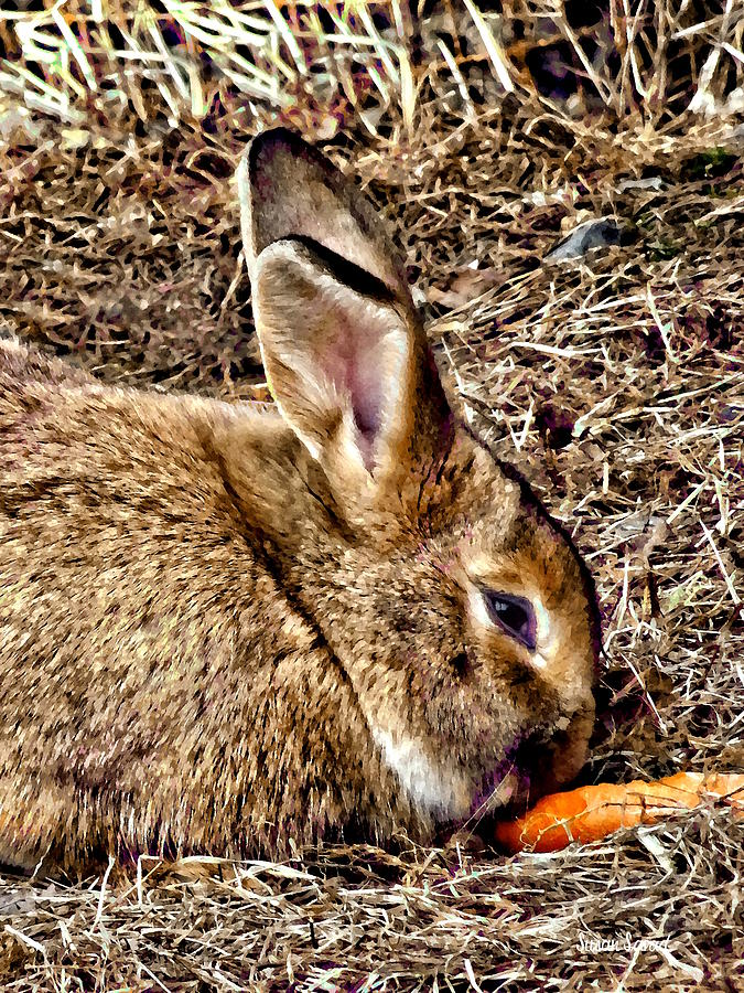 Bunny Nibbling Carrot by Susan Savad
