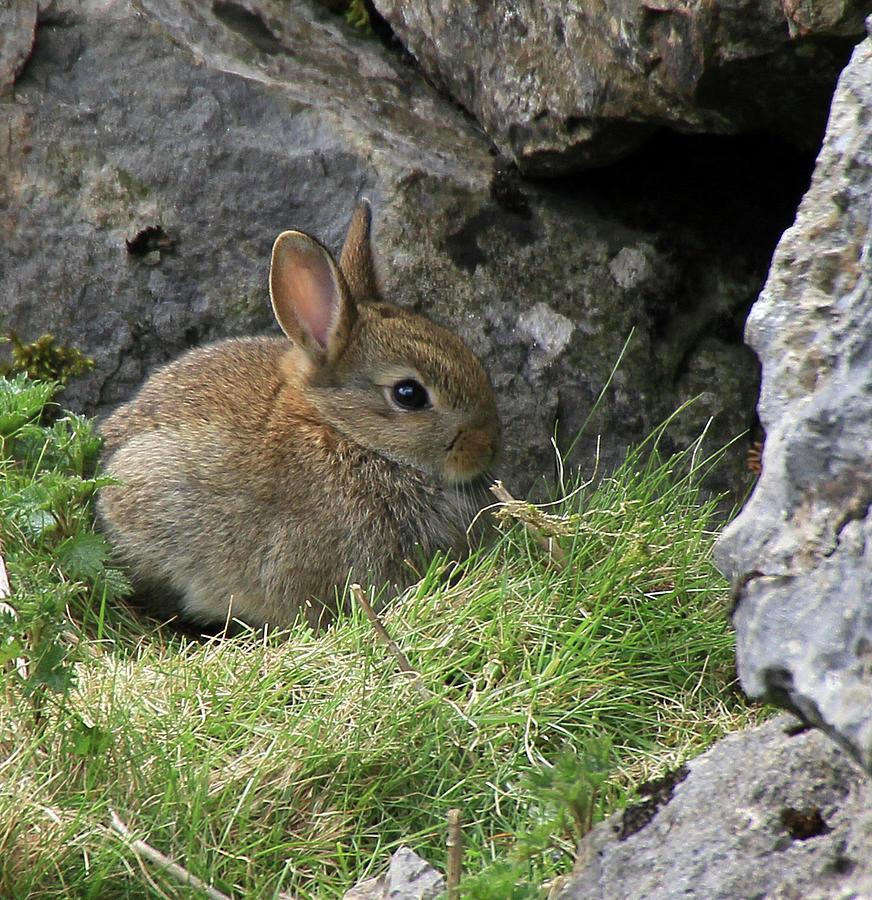Bunny Rabbit Photograph by Photography By Linda Lyon