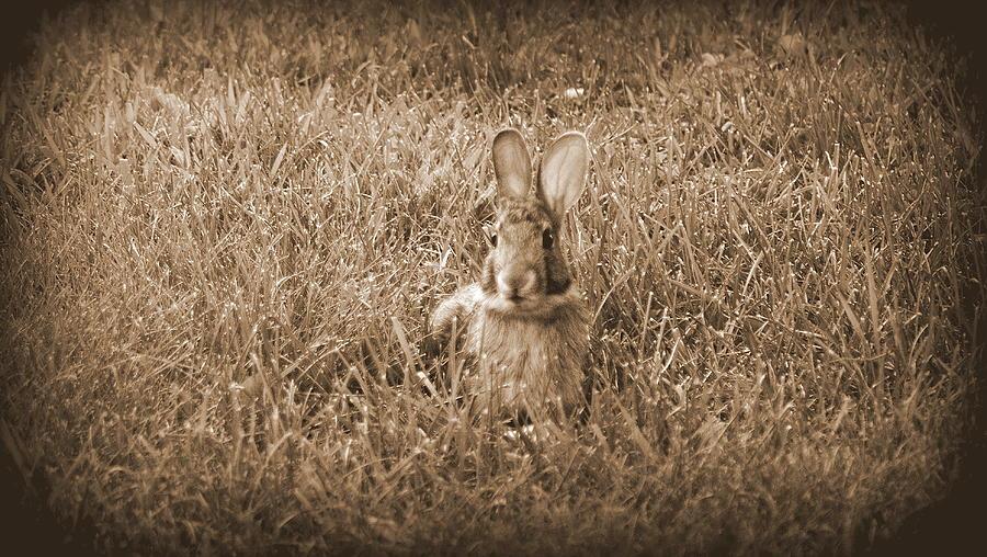 Bunny Sitting by Kimberly Woyak