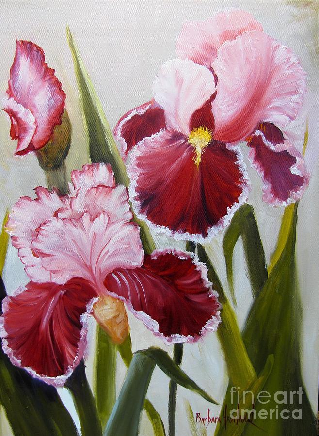 Flower Painting - Burgundy Bearded Iris by Barbara Haviland
