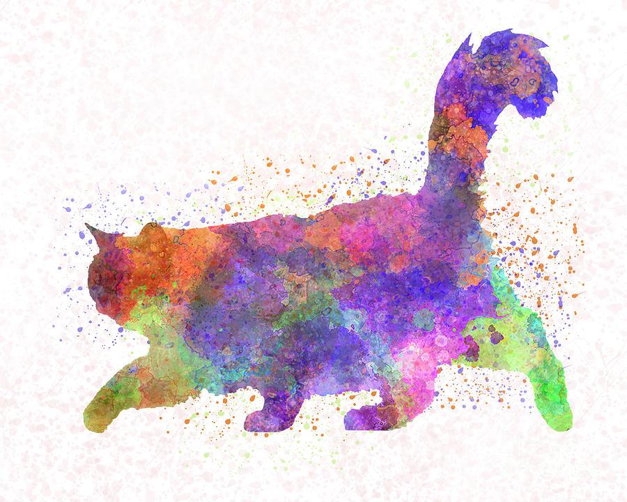 Burma cat in watercolor by Pablo Romero