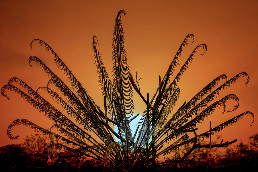 Burmese Fern At Sunset by Chris Lord