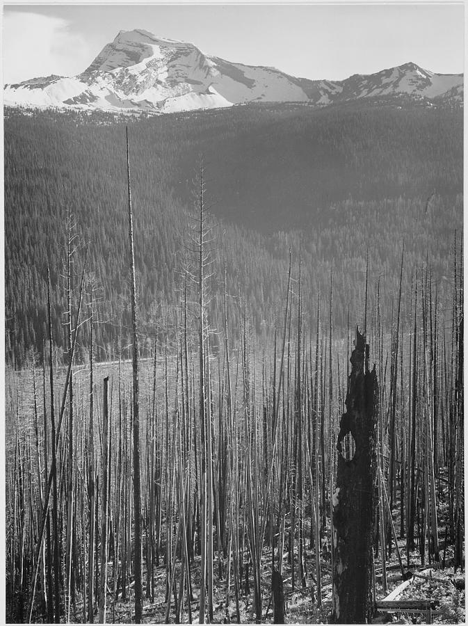 Burned Area Glacier National Park Photograph by Buyenlarge