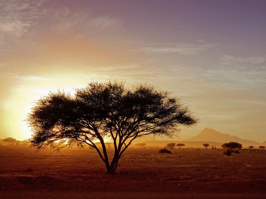 Burning Desert Photograph by Bernd Schunack