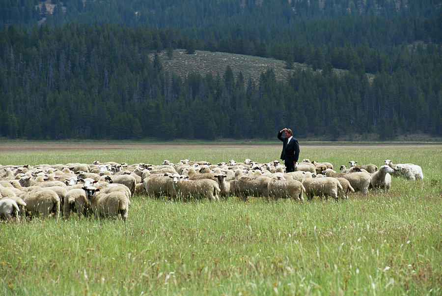 Businessman Standing In Herd Of Sheep Photograph by Steve Smith
