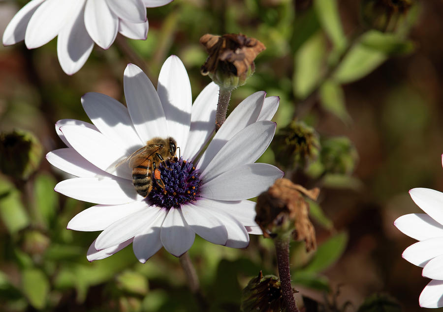 Busy Bee 1 by Naomi Burgess