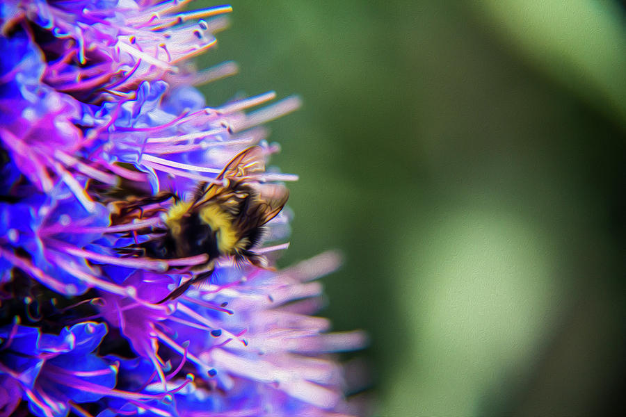 Busy bee 2 by Stuart Manning