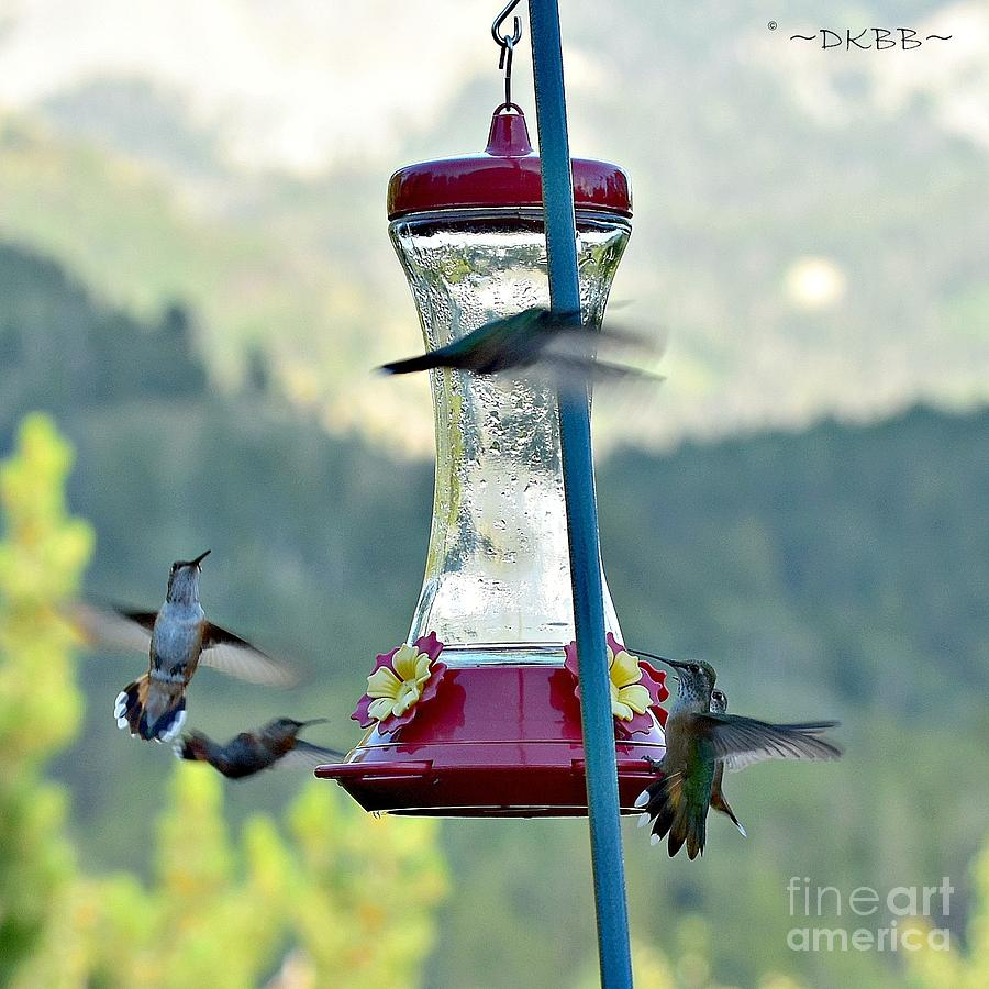 Busy Time at the Feeder by Dorrene BrownButterfield