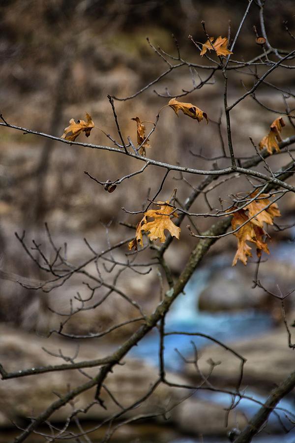 Butcher Falls' Leaves by Jolynn Reed