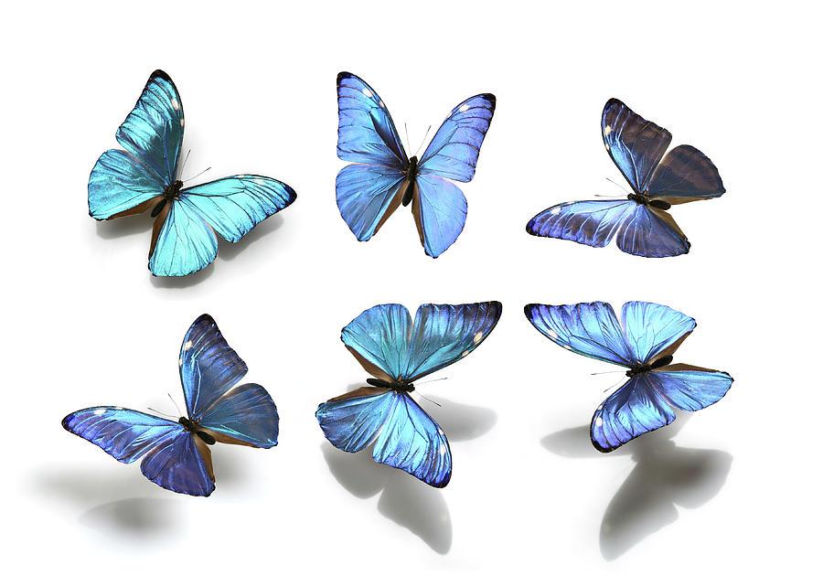 Butterflies Photograph by Antagain