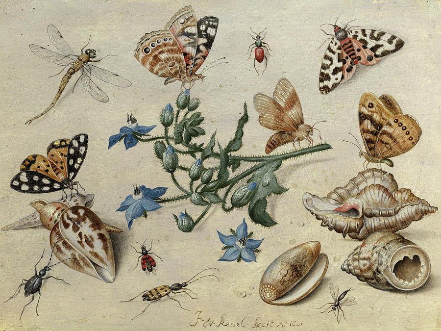 Jan Van Kessel The Elder Photograph - Butterflies, Clams, Insects by Jan van Kessel the Elder
