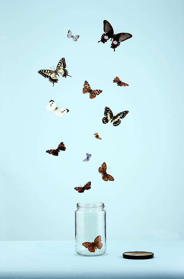Butterflies Escaping From Jar Photograph by Martin Poole
