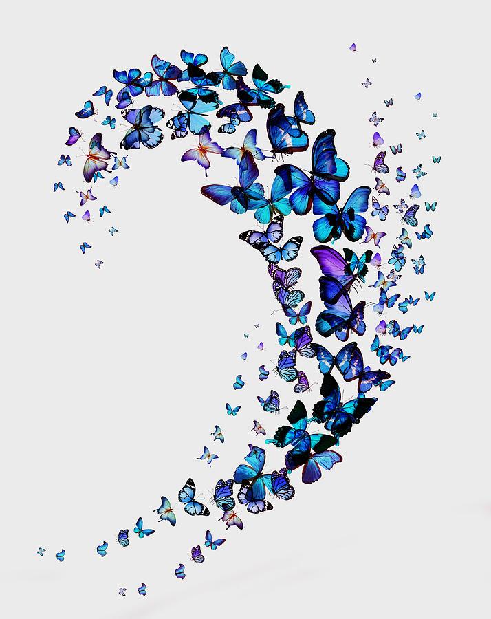 Butterflies Pyrography - Butterflies by Mark Ashkenazi