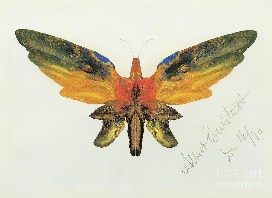 Butterflies Painting - Butterfly, 1890 by Albert Bierstadt