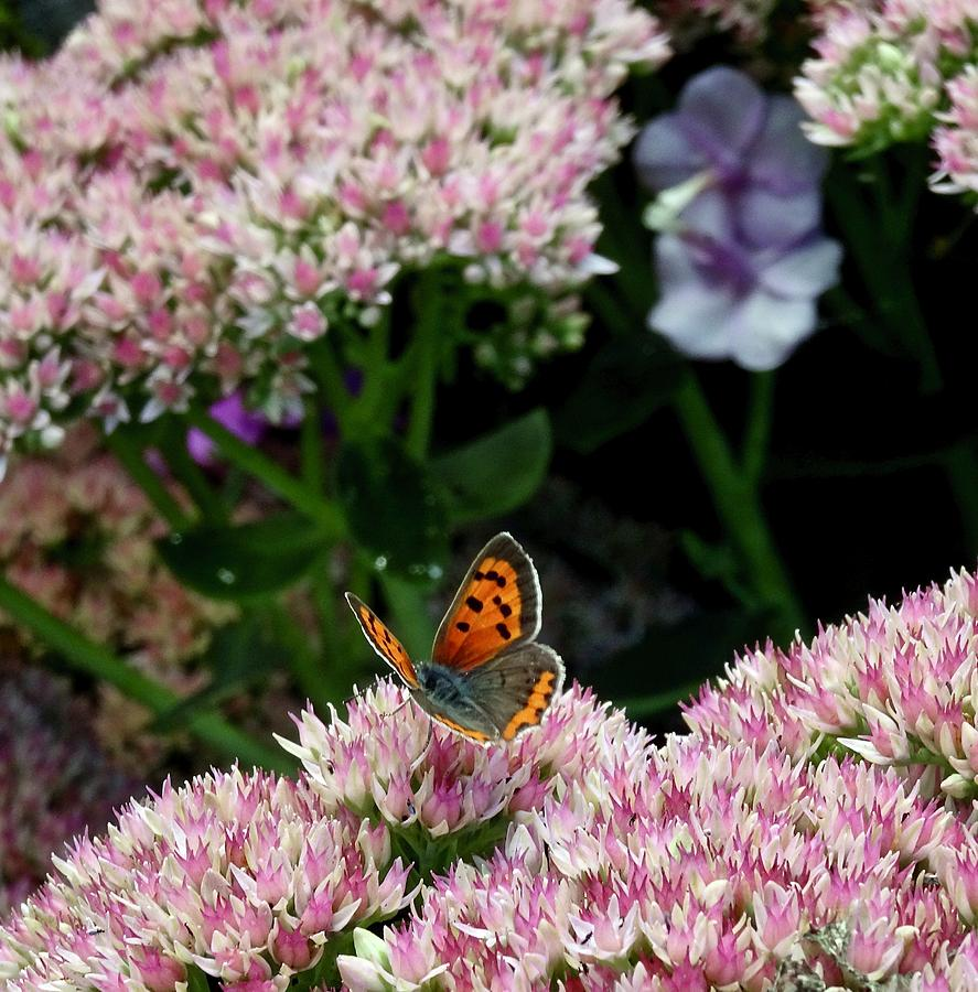 Butterfly Alighted by Catherine Arcolio