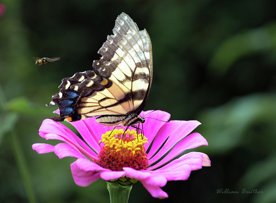 Butterfly and Bee by William Beuther