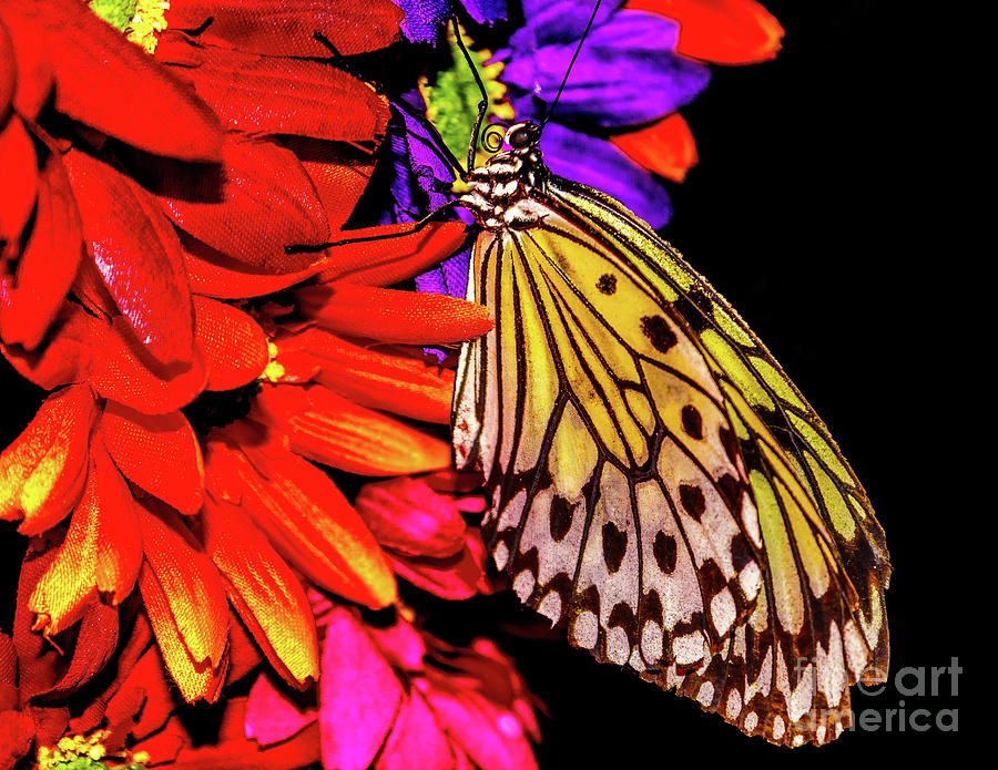 Butterfly and colorful flowers by Nick Zelinsky