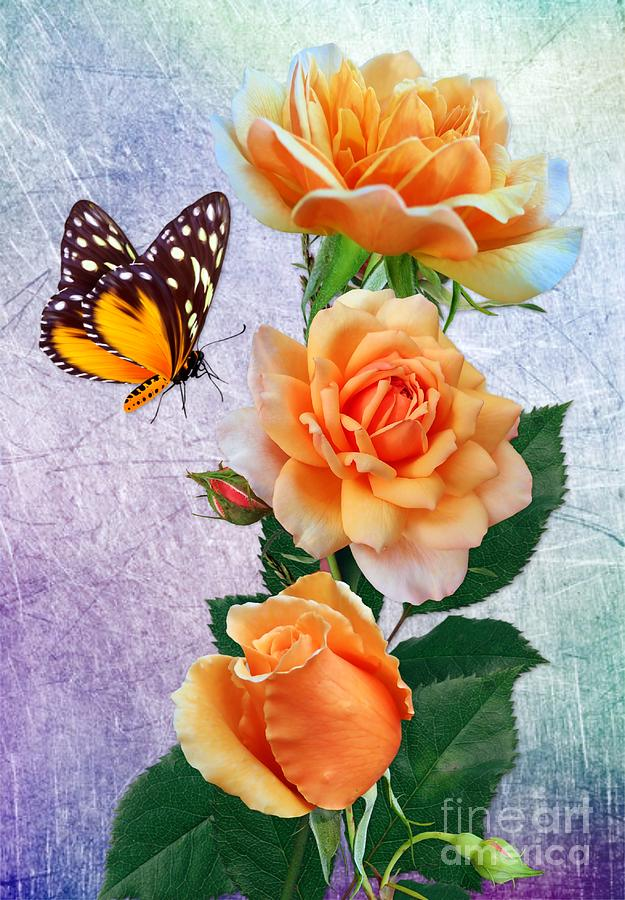 Butterfly and Orange Rosess by Morag Bates
