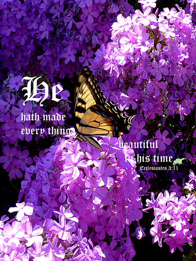 Eastern Tiger Swallowtail Photograph - Butterfly And Phlox With Ecclesiastes 3 Vs 11 by Michael McBrayer