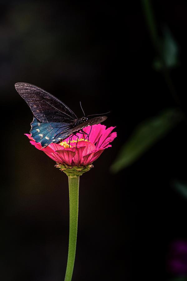 Butterfly and Single glower by Allin Sorenson