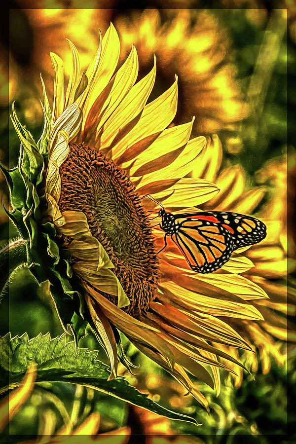 Butterfly and Sunflower at Maria's Field of Hope by Mark Madere