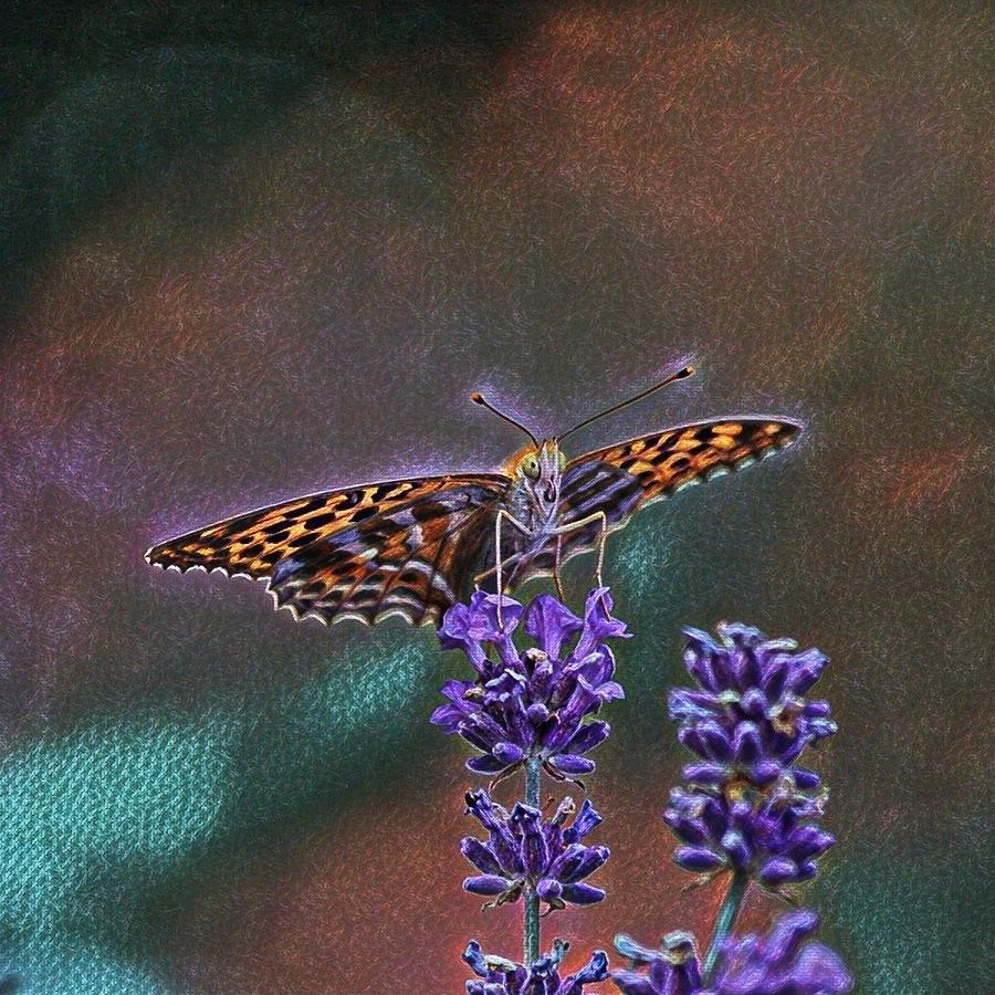 Butterfly Photograph - Butterfly by Angel Eowyn