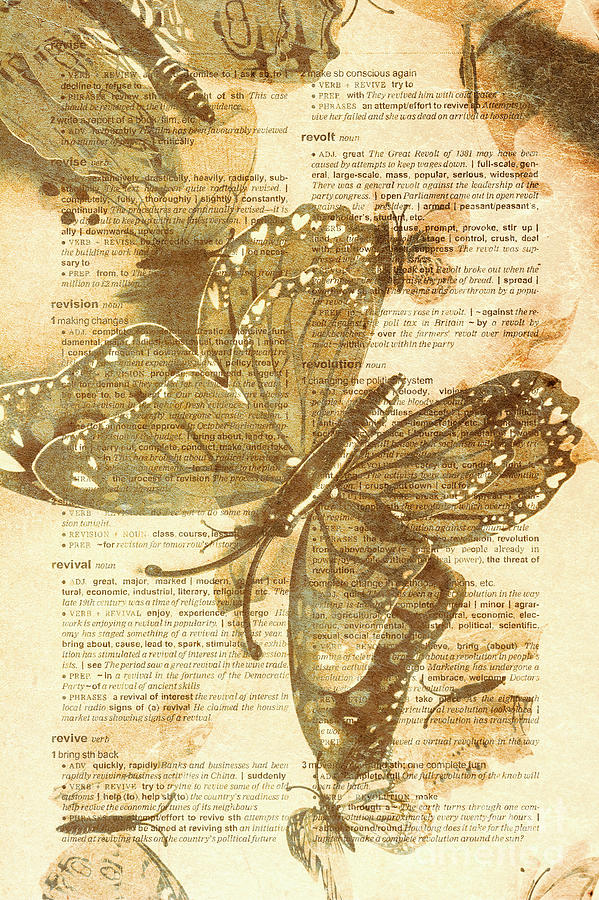 Vintage Photograph - Butterfly Antiquities by Jorgo Photography - Wall Art Gallery