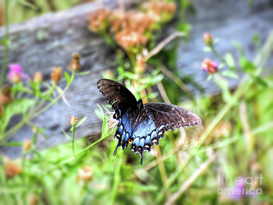 Butterfly At The Fence by Kerri Farley