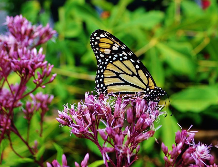 Butterfly Beauty by Eileen Brymer