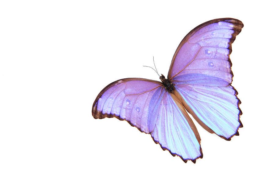 Butterfly Beauty Photograph by Hidesy