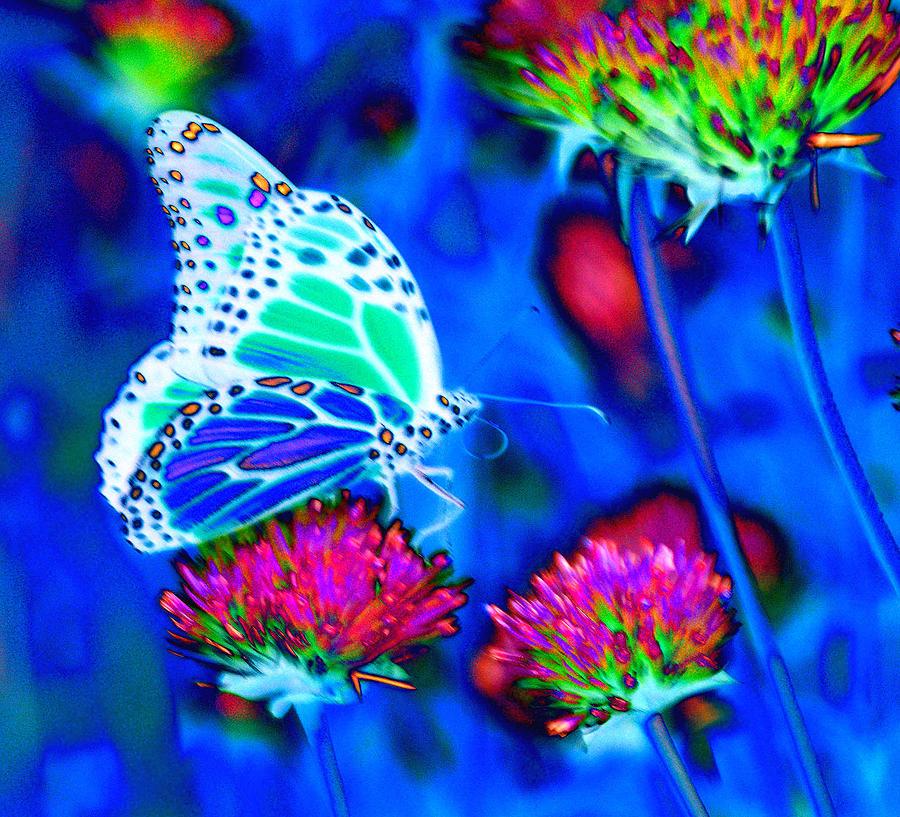 Butterfly Blue Photograph