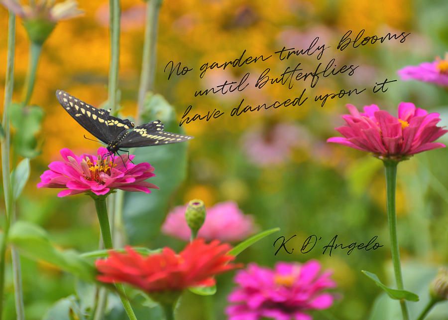 BUTTERFLY BOW TIE quote by Jamart Photography