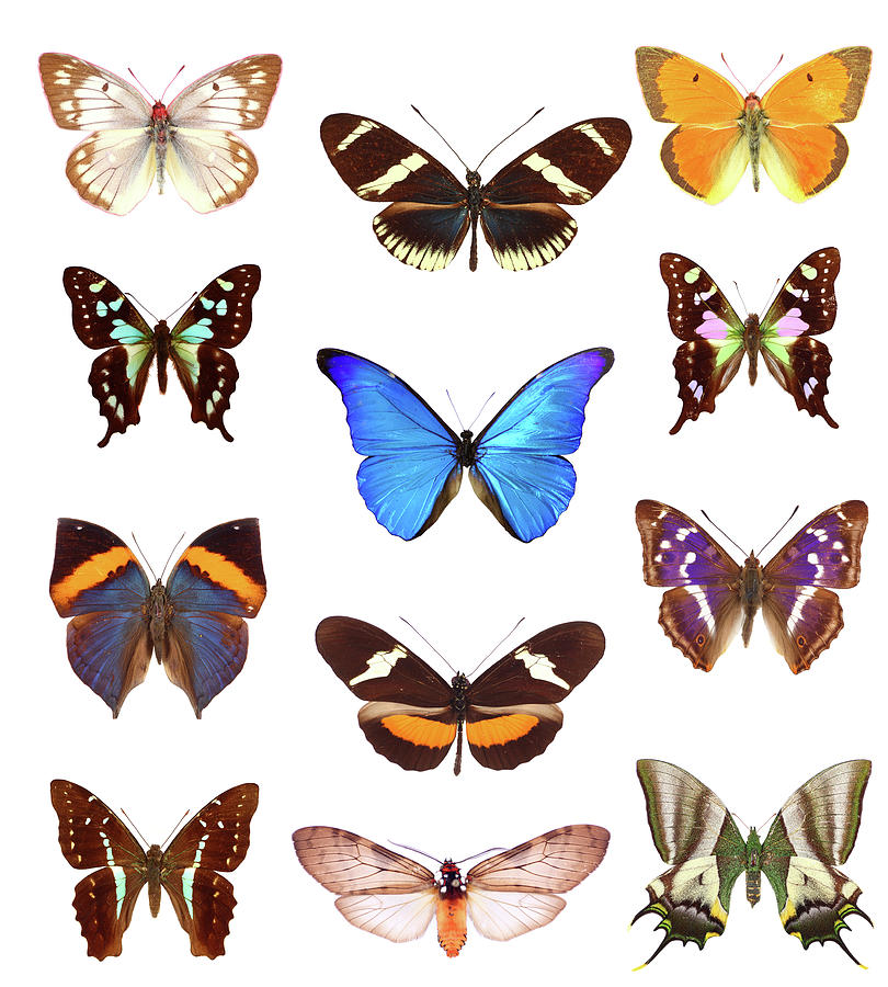 Butterfly Collection Photograph by Imv