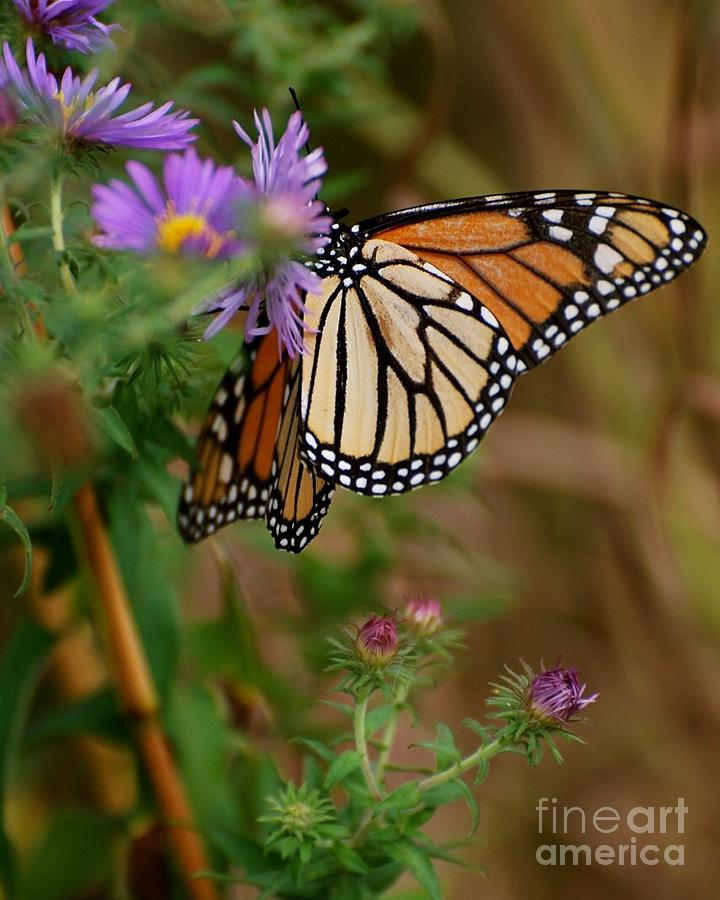 Butterfly Photograph - Butterfly by Deb Cawley