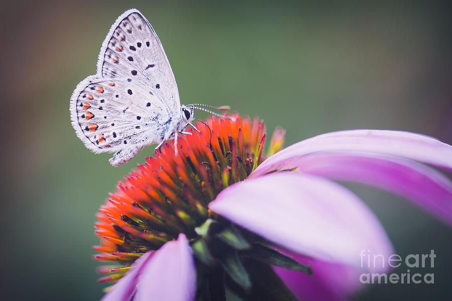 Beauty Photograph - Butterfly Flower Colorful Nature by Murgvi